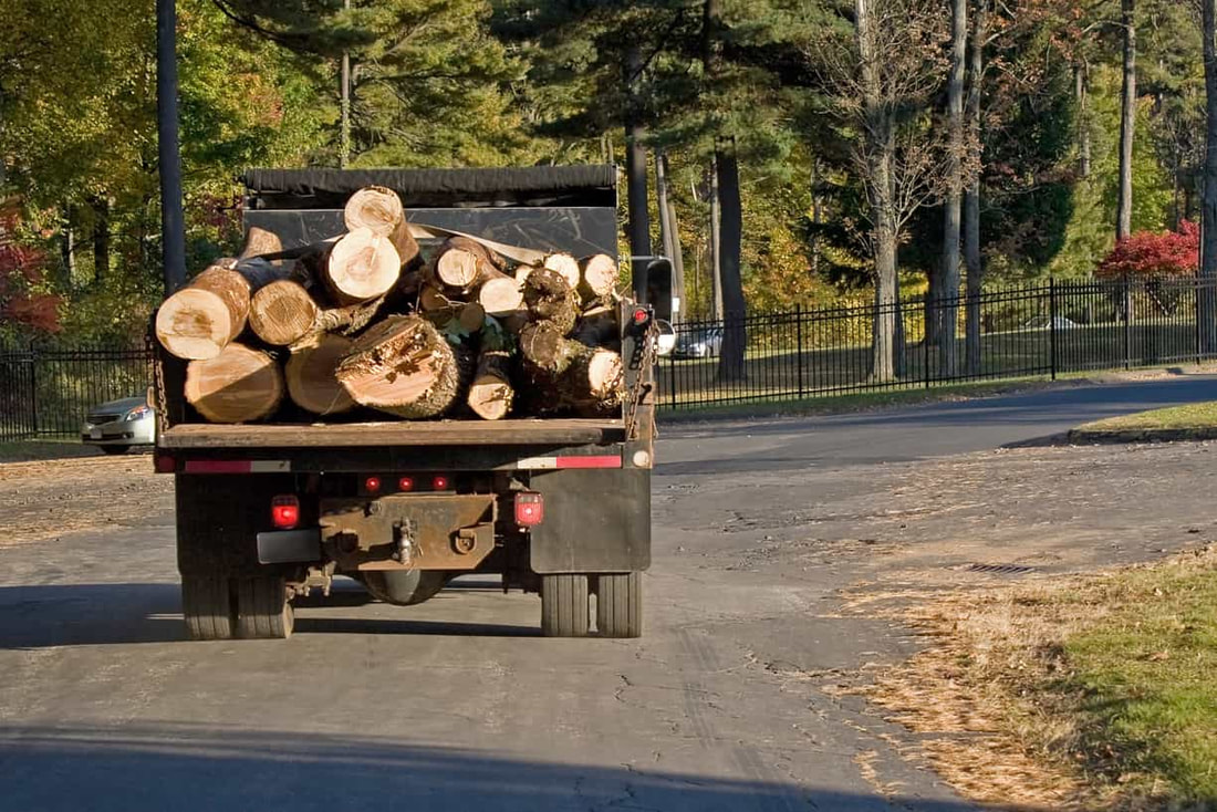 several tree trunks in the back of a truck
